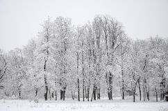 Winter landscape in a snow-covered park after a heavy wet snowfall. A thick layer of snow lies on the branches of trees.  stock photography