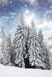 Winter landscape with snow covered pine trees Stock Photos