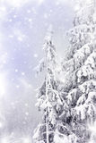 Winter landscape with snow covered pine trees Royalty Free Stock Image