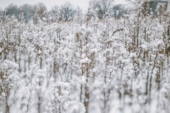 Winter landscape with snow covered plants and trees. Small depth of field for enhancing effect. Winter scene . Frozen flowers Stock Images