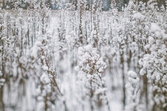 Winter landscape with snow covered plants and trees. Small depth of field for enhancing effect. Winter scene . Frozen flowers Royalty Free Stock Images