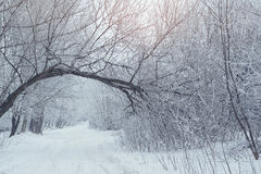 Winter landscape, Snow-covered road in forest Stock Photography