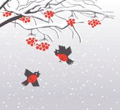 Winter landscape with snow-covered Rowan and birds Royalty Free Stock Image