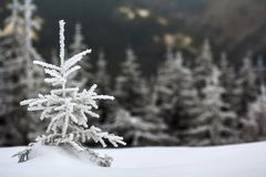 Winter landscape with snow covered small pine tree.  stock photo