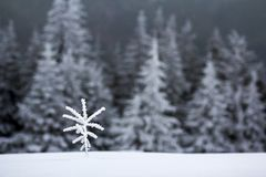 Winter landscape with snow covered small pine tree.  stock photography