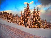 Winter landscape with the snow covered spruce trees Royalty Free Stock Photography