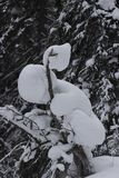 Winter landscape of snow-covered taiga royalty free stock images