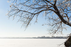 Winter landscape. With snow-covered tree Royalty Free Stock Photo