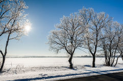 Winter landscape. With snow-covered tree Stock Photos