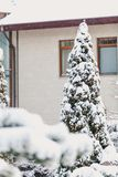 Winter landscape. Snow-covered tree in background of tall house. Winter fairy story. Snow-covered lonely coniferous tree against the background of a high modern Royalty Free Stock Image