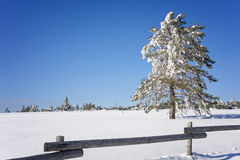 Winter landscape with snow covered tree Stock Photography