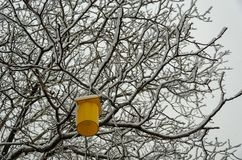 Winter landscape with snow covered tree and yellow lighting. Hanging on tree branch stock photography