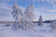 Winter wonder land with trees Stock Image