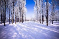 Winter landscape Stock Image