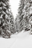 Winter landscape with snow covered trees Royalty Free Stock Images