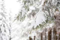 Winter landscape with snow covered trees Royalty Free Stock Photography