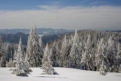 Winter Stock Image