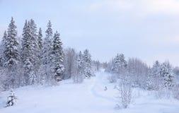 Winter landscape . royalty free stock photos