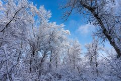 Winter landscape. Snow-covered trees against the sky. Winter forest against the sky Royalty Free Stock Images