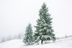 Winter landscape with snow covered trees Stock Image