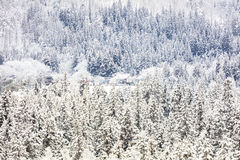 Winter landscape with snow covered trees Royalty Free Stock Photo
