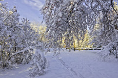 Winter landscape with snow covered trees. Trees in city park covered with fluffy snow at sunny day on the blue sky background. In the foreground is apple tree royalty free stock image