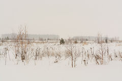Winter landscape with snow covered trees. Winter landscape in forest with trees covered with snow Royalty Free Stock Photography