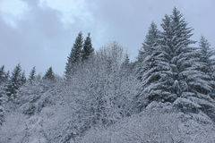 Winter landscape with snow covered trees Stock Images