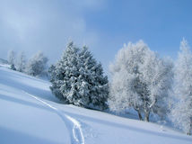 Winter landscape with snow-covered trees Stock Photography