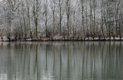 Winter Landscape of Snow Covered Trees Reflecting in Lake Royalty Free Stock Images