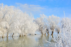 Winter landscape with snow covered trees Royalty Free Stock Image