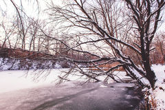Winter landscape of snow-covered trees and river Royalty Free Stock Image