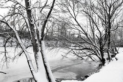 Winter landscape of snow-covered trees and river Royalty Free Stock Photo