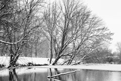 Winter landscape of snow-covered trees and river Stock Photography