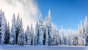 Winter Landscape with Snow Covered Trees on the Ski Hills near the village of Sun Peaks Stock Photo