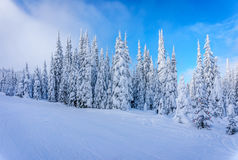 Winter Landscape with Snow Covered Trees on the Ski Hills near the village of Sun Peaks Stock Photography