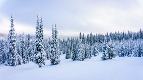 Winter Landscape with Snow Covered Trees on the Ski Hills near the village of Sun Peaks. In the Shuswap Highlands of central British Columbia, Canada royalty free stock image