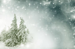 Winter landscape - snow covered trees and sky with stars Royalty Free Stock Image