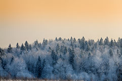 Winter landscape with snow-covered trees at sunset Stock Image