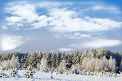 Winter landscape. Snow covered trees Royalty Free Stock Photography