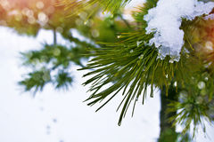 Winter landscape. Snow covered trees Stock Photo