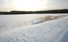 Winter landscape with snow and dry grass on the field Royalty Free Stock Photos
