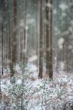 Winter landscape with snow falling and covering everything in En. Winter landscape with snow falling and covering ground and foliage in English countryside Royalty Free Stock Images