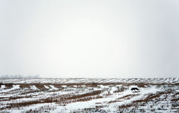 Winter landscape with snow field and dog Royalty Free Stock Photos