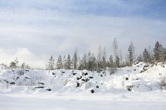 Winter landscape with snow and fir tree. Copy space Stock Images
