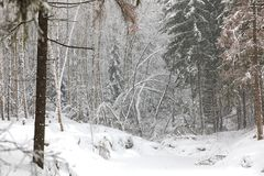 Winter landscape in snow forest Royalty Free Stock Photography