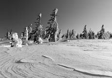 Winter landscape of snow ghosts - Harghita madaras Royalty Free Stock Photos