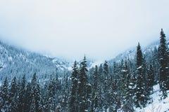 Winter landscape, Snow Lake, Washington. Snow covered pine trees on hillside at Snow Lake, Washington, USA royalty free stock photo