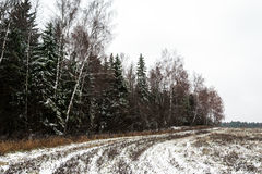Winter landscape, snow mixed forest. Birch and pine Royalty Free Stock Photos