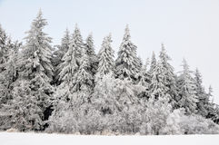 Winter landscape with snow in mountains Stock Photography